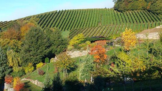 Sasbachwalden, Germany: Haus Bachschwalbe