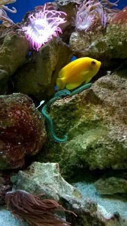 Farnham, UK: Aquarium