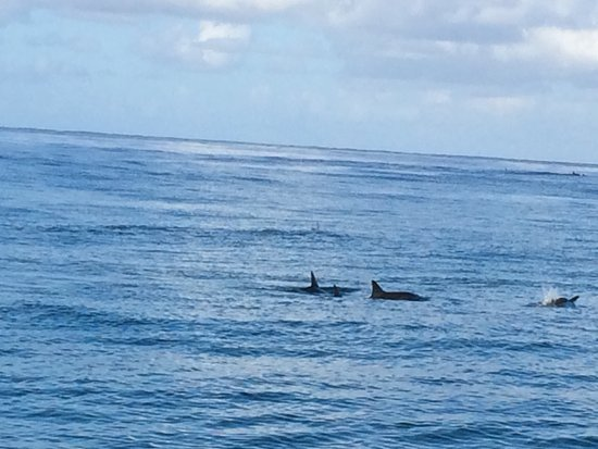 Eleele, Hawái: Dolphins view from raft