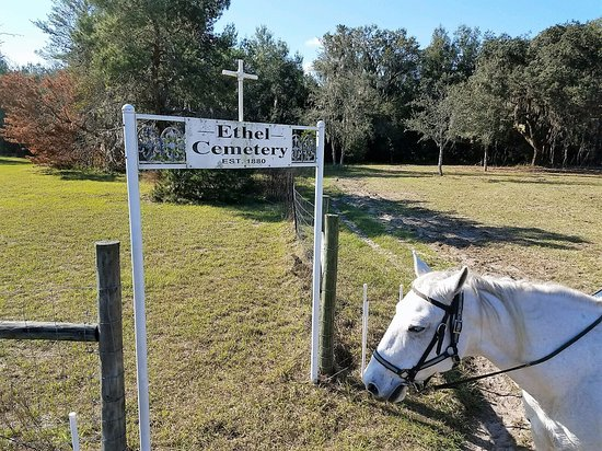 Cactus Jack's Trail Rides : Local history.