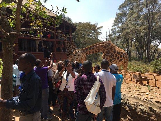 African Fund for Endangered Wildlife (Kenya) Ltd. - Giraffe Centre: photo9.jpg
