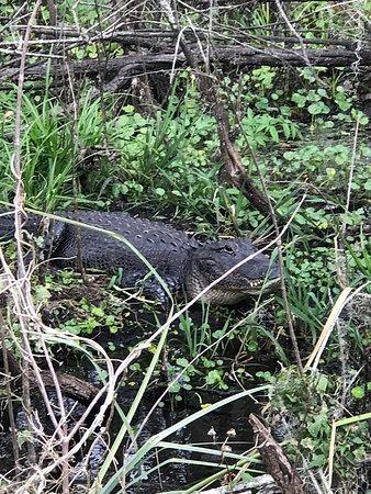 Lake Panasoffkee, FL: photo2.jpg