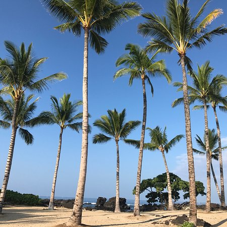 Holualoa, ฮาวาย: photo6.jpg