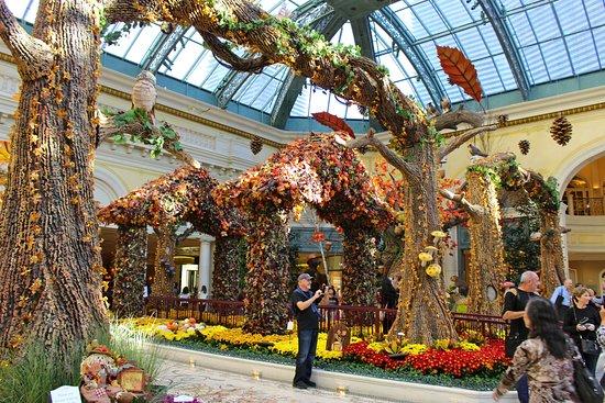Bellagio Conservatory Picture Of Bellagio Conservatory Botanical Garden Las Vegas Tripadvisor
