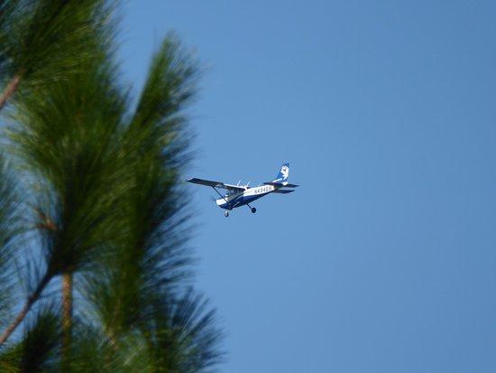 DeLand, FL: Dragonfly?