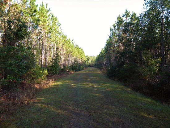 DeLand, FL: Easy to follow this trail