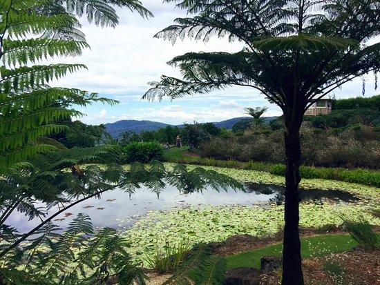 Maleny, Australia: photo3.jpg