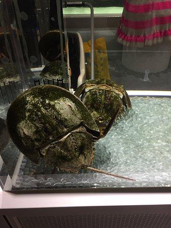 Suita, Giappone: 生きているミュージアム ニフレル