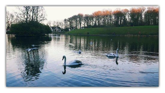 Giffnock, UK: The pond at Rouken Glen Park
