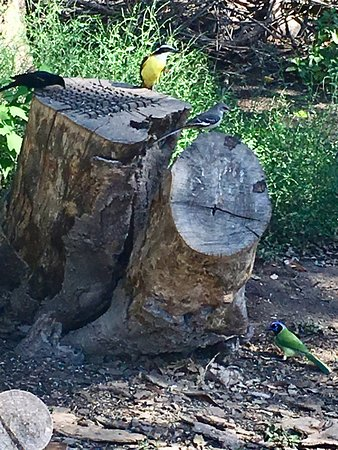 Mission, TX: Tree stump drilled with holes and filled with food for the birds