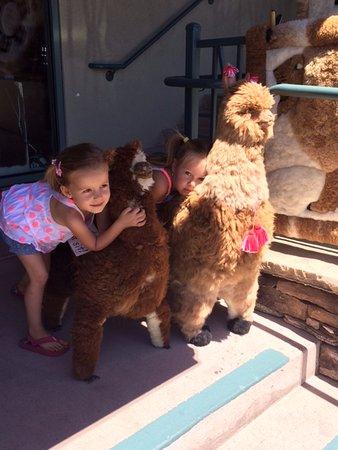 South Lake Tahoe, CA: Love my alpaca