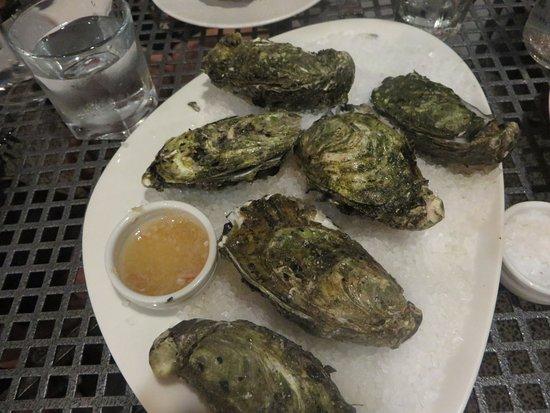 Noosaville, Avustralya: freshly shucked oysters