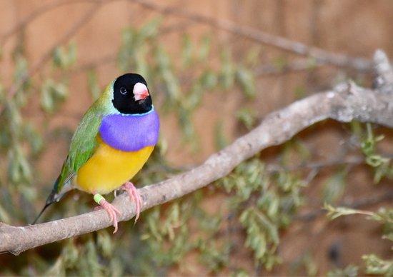 Healesville, Australië: photo3.jpg
