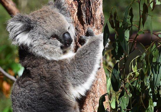 Healesville, Australië: photo6.jpg