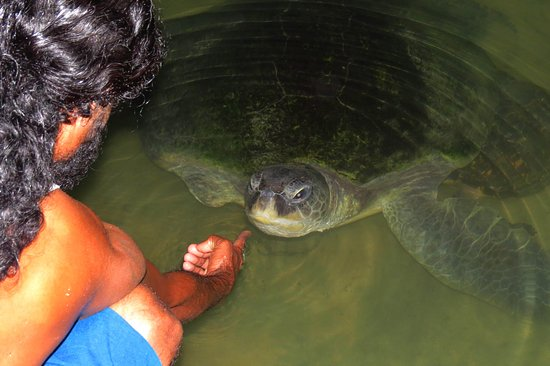 KOSGODA Turtle Conservation and Research Centre