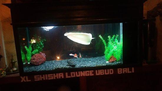 XL Shisha Lounge: 20170121_154801_large.jpg