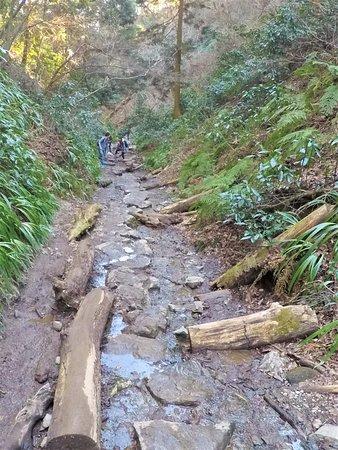 高尾山, The trail of No.6