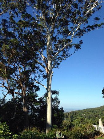 Tamborine Mountain, Australië: A few photos from our stay