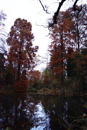 Neuss, Allemagne : Секвойи в оранжерее