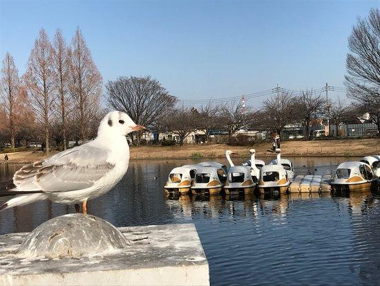 Kawagoe Aquatic Park