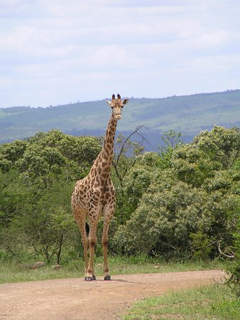 Heritage Day Tours & Safaris : who are you looking at!!!