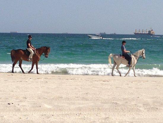Al Forsan Horse Riding