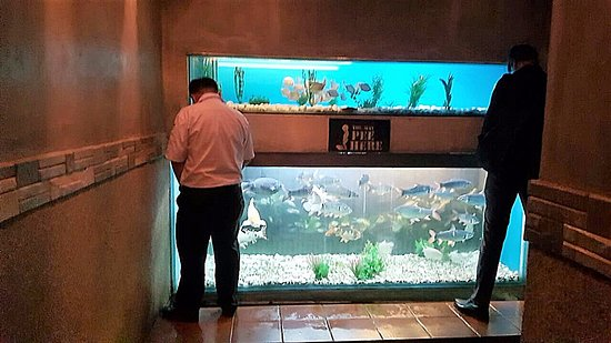 Subang Jaya, Malesia: Urinal with glass aquarium backdrop complete with koi fishes.