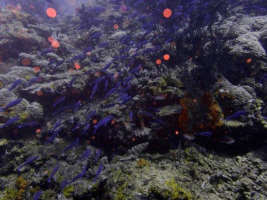 Scuba Steve's Diving Ltd.: Beautiful fish