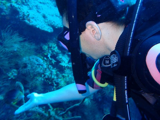 Scuba Steve's Diving Ltd.: Chad showed my wife how the fish would try to eat from your hand.