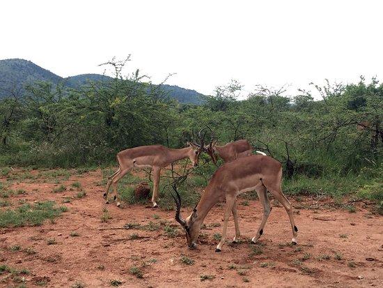 Germiston, Южная Африка: Monkey Sanctuary and Pilanesberg safari