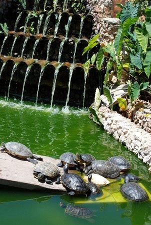 Calvia, Spain: Sköldpaddor