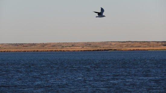 Balneario El Condor, Argentiina: Emabarcadero - el Río Negro llega al Mar. Reserva de aves.