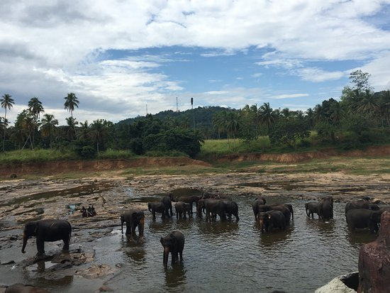 A quick snapshot of my wonderful few hours at the Pinnawala Elephant Orphanage. Such a stunning