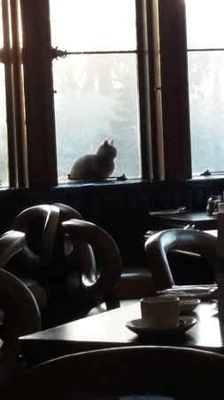 Tortworth, UK: Cat sat outside the window