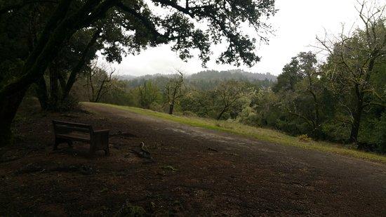 Palo Alto, CA: 20170121_151229_large.jpg