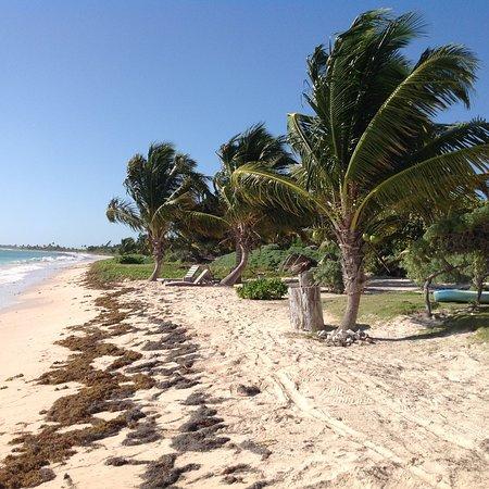 Mayan Beach Garden: photo5.jpg