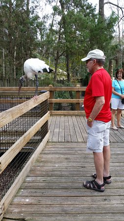 Homosassa Springs, FL: Checking out the back end of a bird