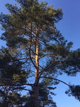Voornes Duin: Prachtig weer, mooie bomen, veel vogels, een wandeling in ieder jaargetijde is een aanrader