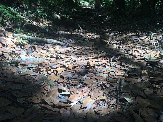 Grecia, Costa Rica: photo9.jpg