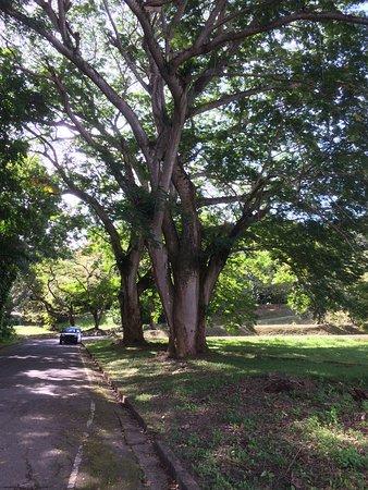 Jardin Botanico : photo4.jpg