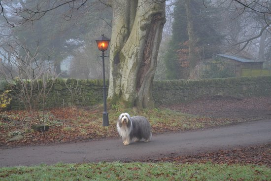 Closeburn, UK: Perfect for dogs to have a run around safely .