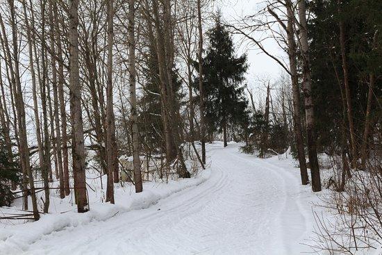 Ershovo Ski Area