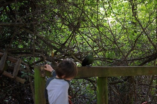 The Crags, South Africa: Knysna turaco with kid