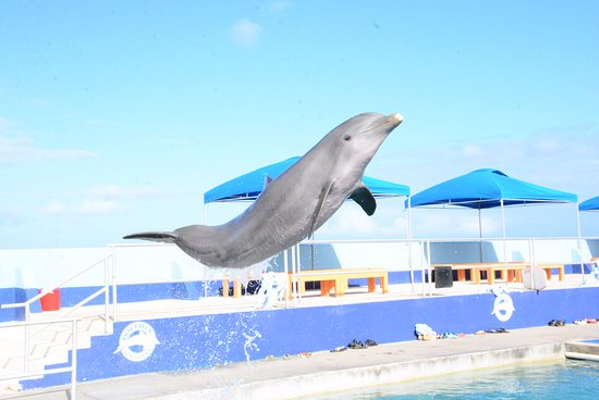 Dolphin Discovery Grand Cayman