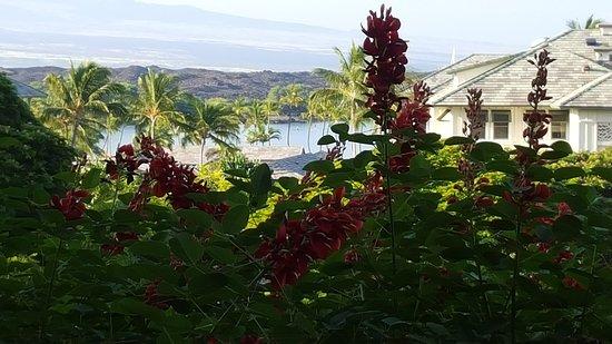 Vista Waikoloa: 20151103_075819_large.jpg