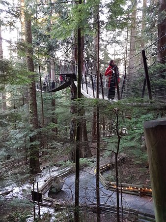 North Vancouver, Kanada: tree top adventure