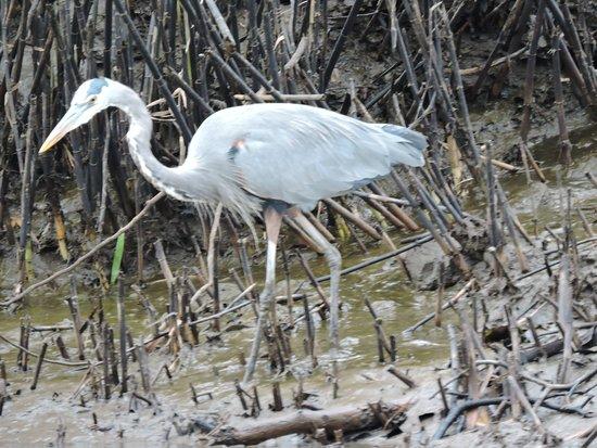Playa Hermosa, Κόστα Ρίκα: info@mardigitours.com