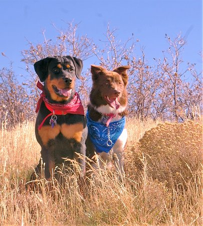 West Jordan, UT: Our fur babies