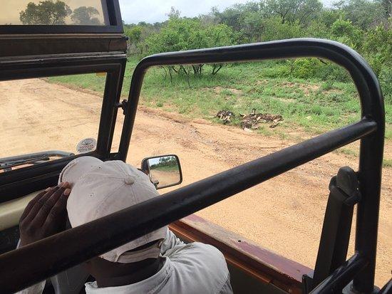 Marloth Park, Sydafrika: Voici les merveilleux éléments que vous pouvez trouver lorsque vous vous baladez dans le ou à pr