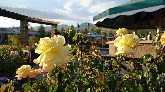 Cholpon Ata, Kirguistán: hinter den Rosen eine Strandbar und die komfortablen Bungalows